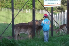 für Kinder eine Attraktion - Füttern der Wildtiere