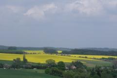 Klingenberger Umgebung - Rapsfelder im Frühling